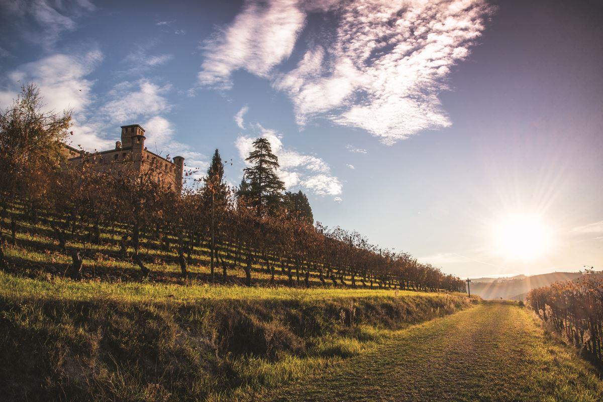 Wine Focus: Verde/Bianco/Rosso