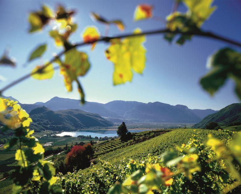 Guest Column: The Wines of Alto Adige-Südtirol