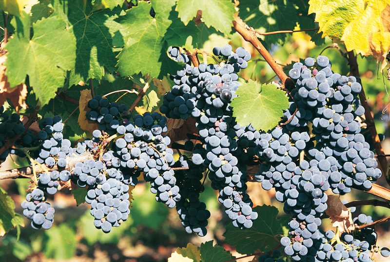 November's Red Refresh: Red Wines Lighten Up