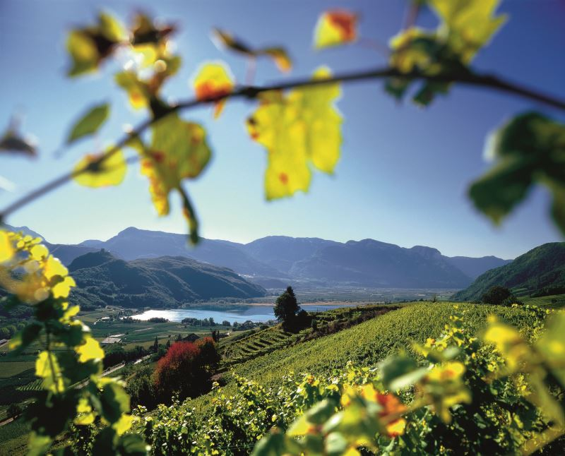 Guest Column: The Wines of Alto Adige-Südtirol