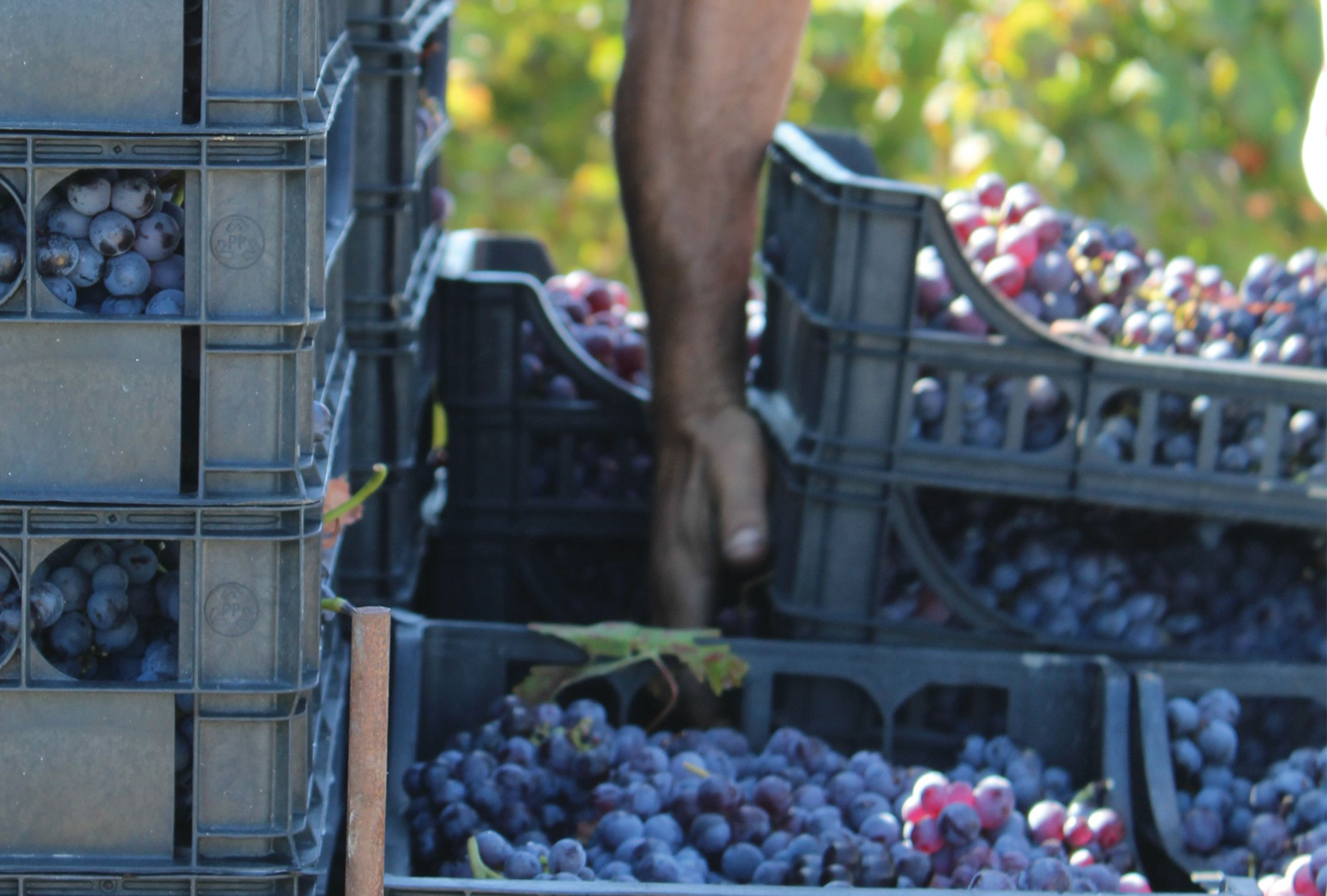 Region Focus: Calabria's Wines Ripe for Rediscovery