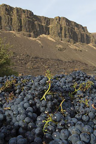 Washington State Announces Record Wine Grape Harvest for 2016