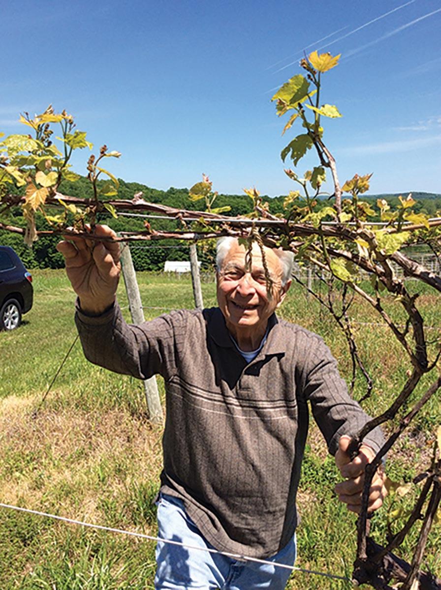 Founder of DiGrazia Vineyards Leaves Far-Reaching Legacy