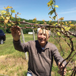 Dr. Paul DiGrazia checking buds.