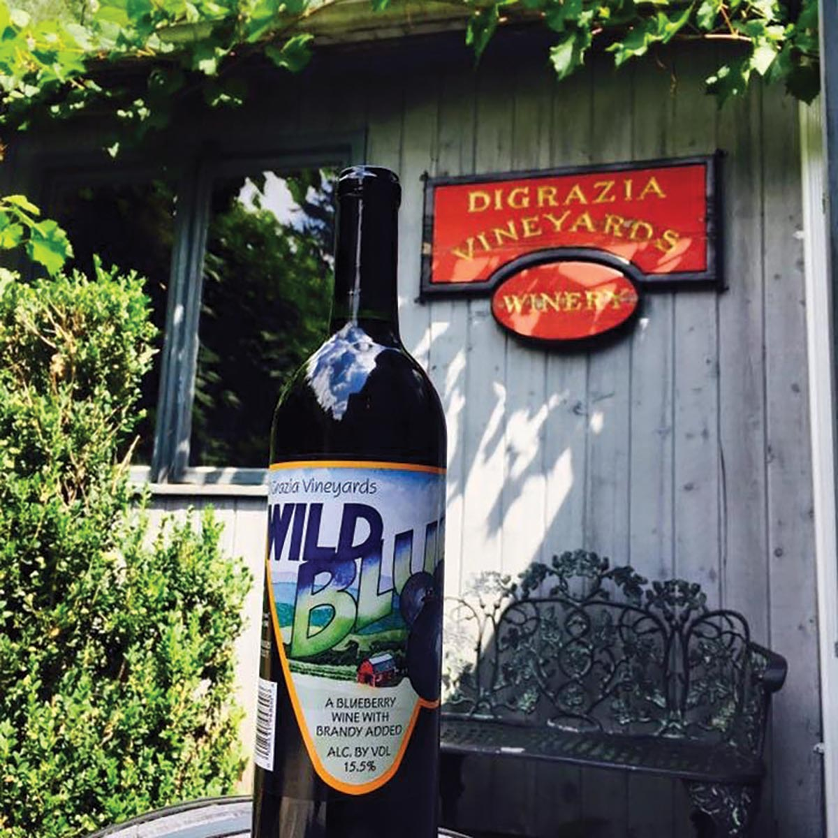 DiGrazia Vineyards Hosts Guests for Summer