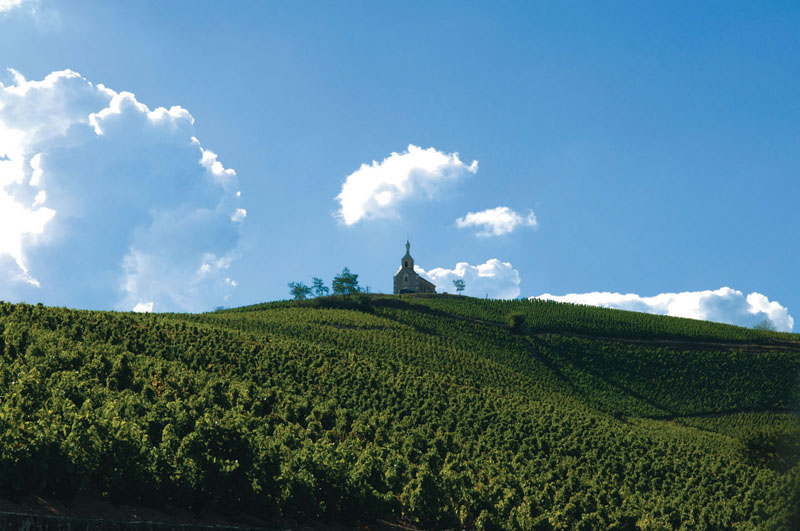 January Feature: Cru Beaujolais in Post-Nouveau World