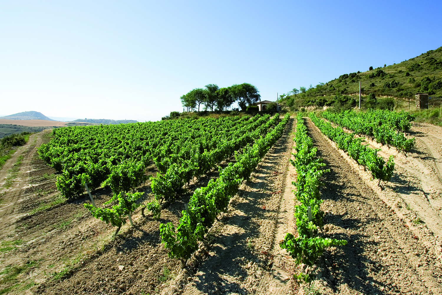 Winery Focus: Rioja's Masters of Age