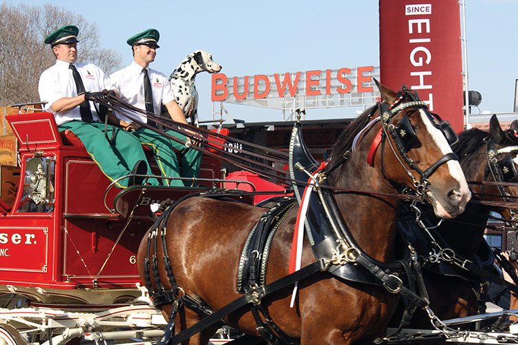 Budweiser Clydesdales Appear at Dichello to Honor Veterans