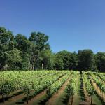 Nickle Creek Vineyard.