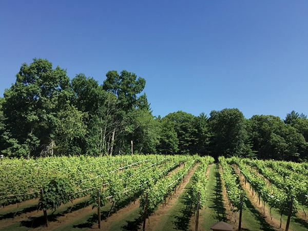 Vineyard View: Surprise Success for Nickle Creek Vineyard