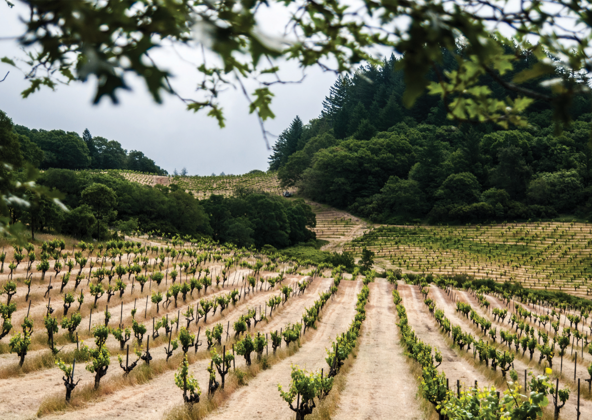 February Wine Focus: Napa's New Era