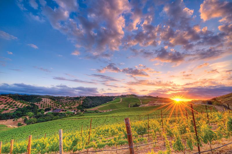 Wine Region: Paso Rising
