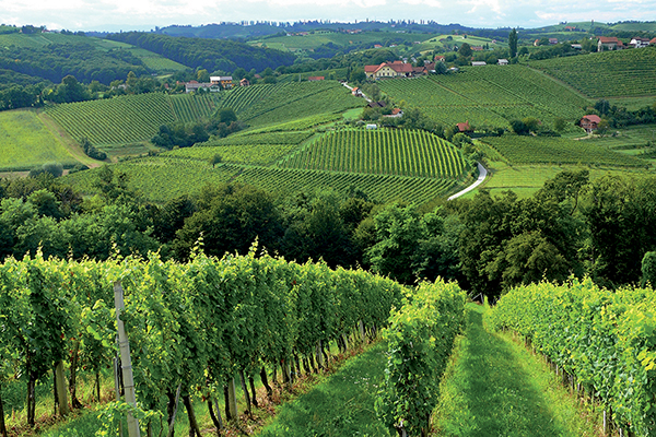 Worldwide Wines Offers New Entry from Slovenia to Connecticut