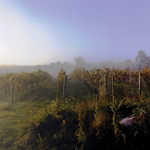 Maugle Sierra Vineyards.