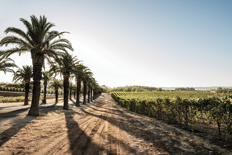 Region Focus: Barossa's Return to Cool