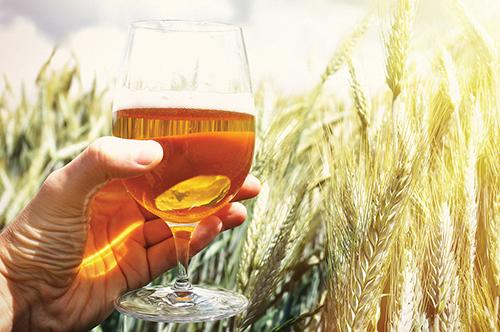 Beer Column: Hops Gone Wild