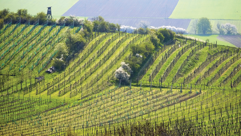 Wine Focus on Austria: The Future Is Now