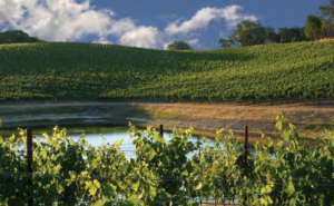 Dry Creek Vineyard, in Sonoma's Dry Creek Valley, excels in Sauvignon Blanc and Zinfandel from their estate vineyards, but their secret weapon wine is Chenin Blanc from Clarksburg.