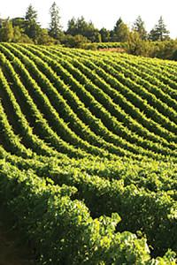 E. & J. Gallo Winery Cypress Ranch