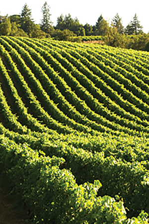 Gallo Acquires Napa Valley Vineyards
