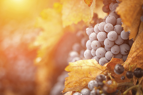 Vineyards Take Accolades and Rankings into the New Year