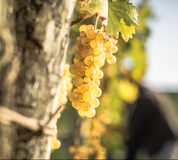 Wine Region Focus: Eastern Treasures