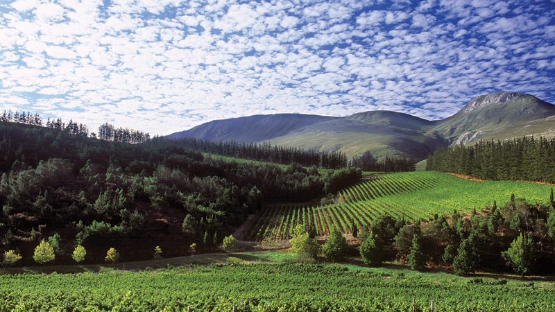 January Wine Focus: Cool Climate South Africa