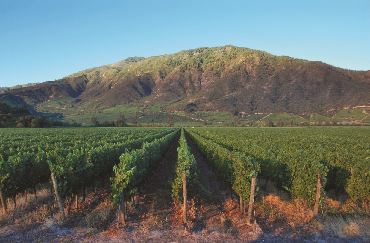 Region Focus on Chile: Follow That Cab
