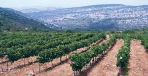 toc_israeli_wines
