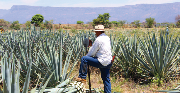 April Cover Story: Back to Basics, Tequila 101