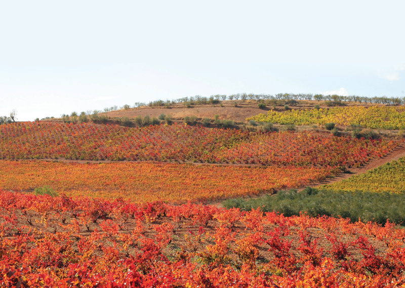 Wine Region Focus: Spain's Cariñena