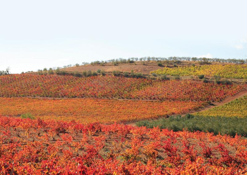 Wine Region Focus: Spain's Cariñena