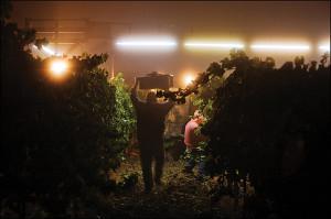 Wine Institute 2014 California Wine Harvest